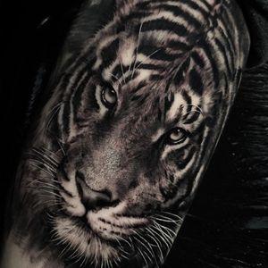 Tiger tattoo by ubiratanamorim #ubiratanamorim #hyperrealism #realism #blackandgrey #tiger #cattattoo #junglecat