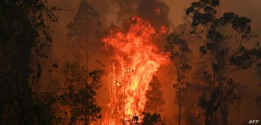 Fighting Wildfire: Fundly for Australia