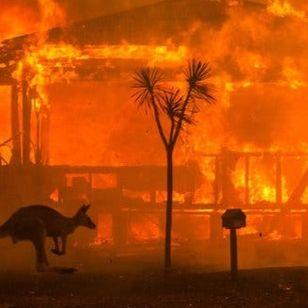 Australia bushfires rage while animals try desperately to escape.