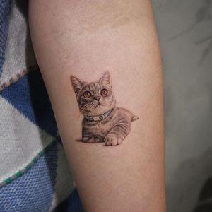 Cat tattoo by Youyeon #Youyeon #cat #kitty #petportrait #animal #illustrative #realism