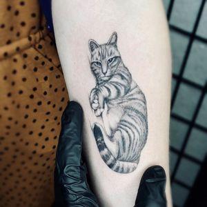 Illustrative tattoo by Fan Wu #FanWu #illustrative #linework #drawing #cat #petportrait #arm