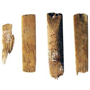 Ancient tattoo tools from Tangatapu #tangatapu #tattootools #tattoosupplies #tattoohistory #tattooculture