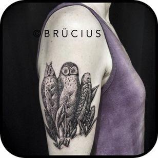 Fun engraving illustration by Brücius #blackwork #owl #owltattoo