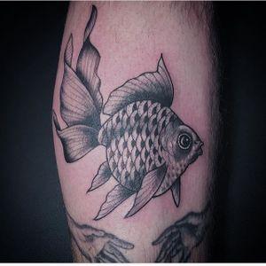 Michelle Tarantelli Tattoo #blackandgreytattoo #fishkisses #fishtattoo #needahand?