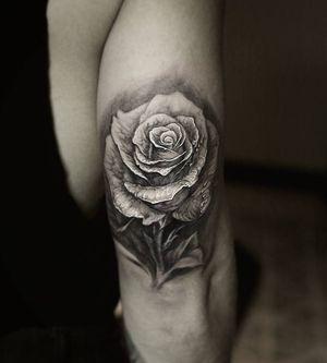 #stefanoalcantara #rosetattoo #rose #honorwomen