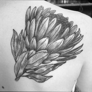 Protea flower on shoulder. #floral #blackwork #linework