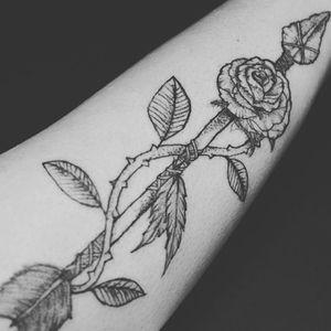 Flecha e Rosa