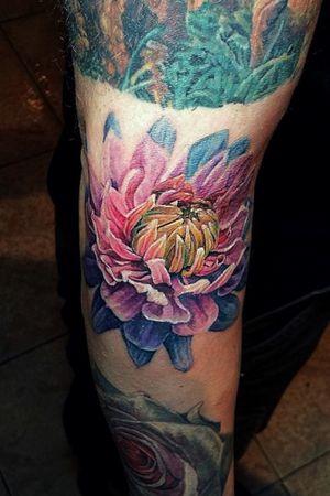 Color layered Chrysanthenum on John