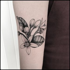 #totemica #tunguska #black #botanical #plant #flower #orangeblossom #tattoo #hardtimestattoo #torino #italy #blacktattooart #tattoolifemagazine #tattoodo #blackworkers #blackwork