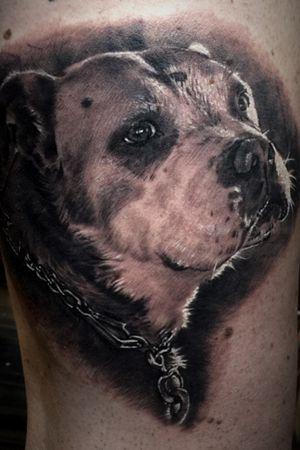 Dog portait #bestrealistictattoos #radtattoos #tattoo_artwork #tattoorealistic #bnginksociety #chinesetattoo #tattooinkspiration #tat #tattoodo #tattoos_of_instagram #tattoo #tattoos #skinart_mag #纹身 #刺青 #纹所未闻家族 #inkgeetstattoos #tattoolifemagazine #inkspiringtattoos #TattooistArtMag #inkedmag #inkedselect #kurosumizhangpogreywashset #zhangpogreywashshadingset