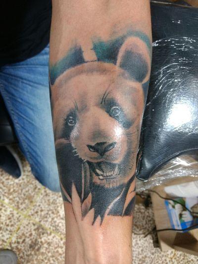 #panda #isabel