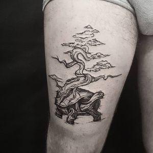 Dark tortoise with bonsai
