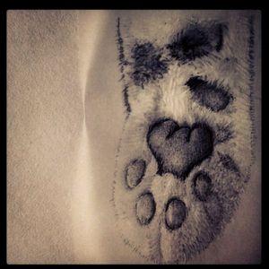 Cat - love - gato