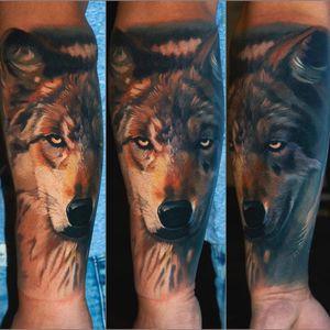 Wolf on tanned skin, one session #wolftattoo #wroclawtattoo #polandtattoos #alminztattoo