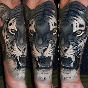 One session #blackngrey #tiger #alminztattoo