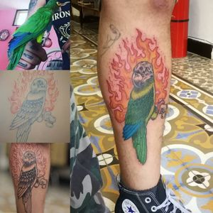 Parakeet. Booking on my whatsapp +522223605806 and DM ✌🏻🤓 #parakeet #tattoo #tatuaje #pettattoo #mascota #personalizeddesign #colortattoo #ink #inked #HybridoKymera #puebla #mexico #tatuadoresmexicanos #mexican #arm #armtattoo #brazo #mexicano #kraken #hechoenmexico #madeinmexico #neotraditional #newschool #flames #flamas #skull #craneo @tattoodo