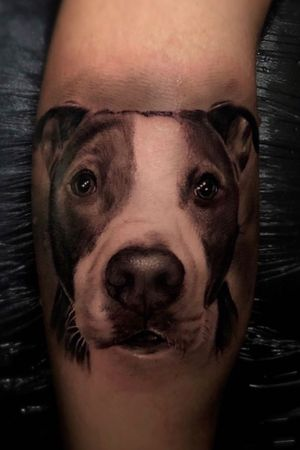 Your pet in yhe skin