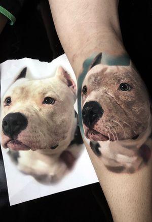 feito hoje, em 6h de trampo, aproximadamente #bulldog #dog #animal #tattoo #ink #intenzepride #americanbully