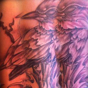 Martin Pêcheur en noir et blanc sur le bras d'un homme #oiseau
