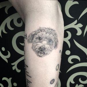 """Dog portrait, under 2"""""""