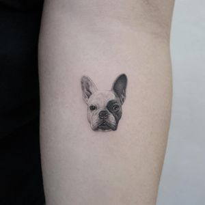 Tattoo by Youyeon #Youyeon #blackandgreyrealismtattoos #blackandgreyrealism #blackandgrey #realism #hyperrealism #realistic #dog #animal #petportrait #frenchpug #pug #cute #little #tiny #small