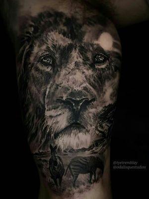 #lion #zebra #wildlife #blackandgrey #realism