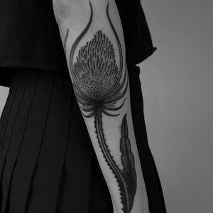 Tattoo by Laura Yahna #LauraYahna #blackwork #darkart #illustrative #thistle #flower #floral #nature #plant