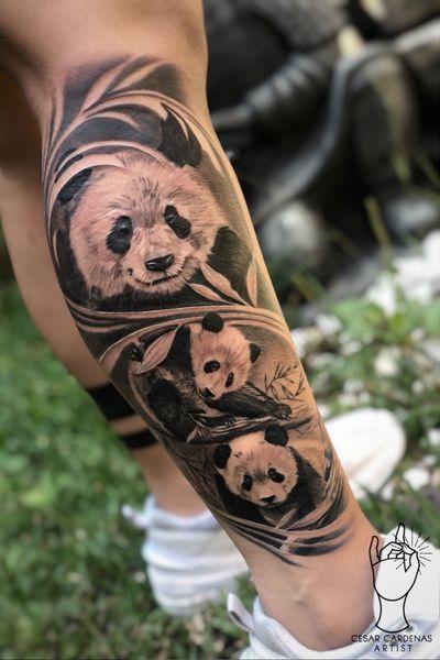🐼 Pandas family Encuentrame en instagram como @cesarcardenas93 Citas y asesorías al WhatsApp 3122749644 Usando @cheyenne_tattooequipment @radiantcolorsink @intenzetattooink @protonstencil #realismosombras #panda #pandatattoo #medellin #medellintattoo #tattoomedellin #art #blackandwhite #bear #beartattoo #tattoo #tattoomodel #tattoostyle #pereira #medellincolombia #medellincity #medellincapitalfitness