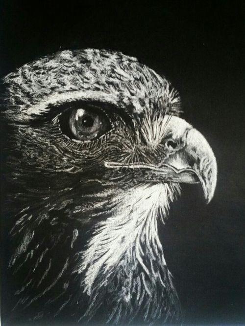 #eagle #eagletattoo #iblackwork #drawings #teampoisoniv #blackinktattoo