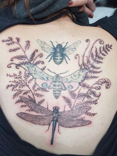 #finelinetattoo #fineline #illustrative #bee #moth #dragonfly #botanical