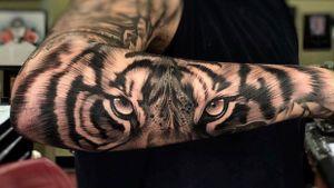 Black and grey tiger