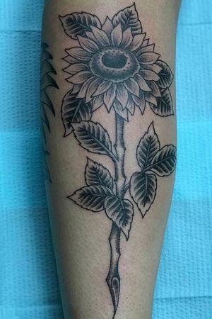 #GibbsScott #sunflower #flower