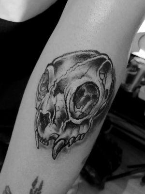 Cat skull #intenzeink #suluapeblack #666 #tattoobogota #bogotatattoo #blackink #blacktattoo #catcoven