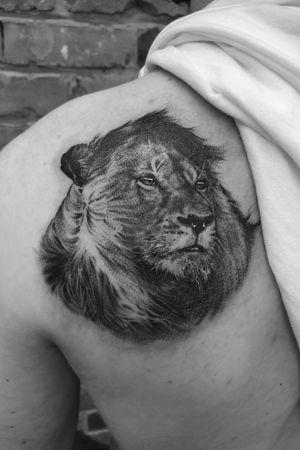 Black and grey, realistic, fine line, 3rl only lion portrait on shoulder