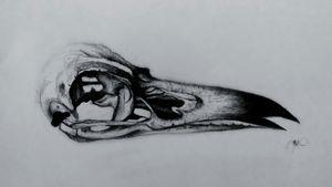 #raven #black #blackwork #tattoo #dark #skull