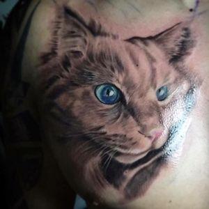 Realistic cat tattoo