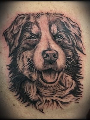 Man's best friend!