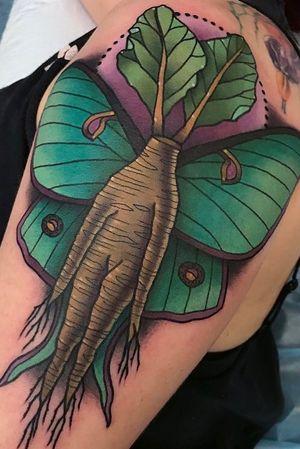 Mandrake root and luna moth tattoo