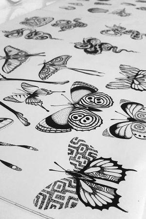 Butterfly dotwork flash #butterflies #butterfly #Flash #dotwork #blackwork #butterflyflash