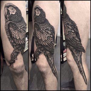 #parrot #feathers #leg #black #linework
