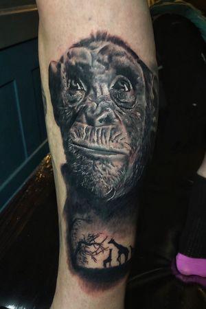 Chimp! Adding the background next time #tattooartist #blackandgrey #realism #sleeve