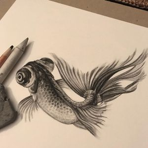 Fantail goldfish/charcoal on bristol
