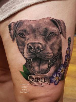 Rebel pet portrait tattoo of pretty pit bull