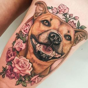 Red Staffy with miniature roses portrait