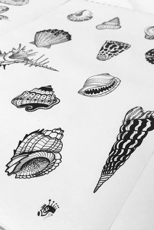 Shell flash, available for tattooing #shell #shells #flash #designs #illustration #blackandgrey #blackwork