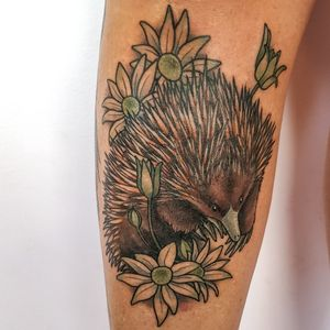 Short beaked echidna and flannel flowers