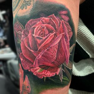 Pink rose fron day 2 at Musink