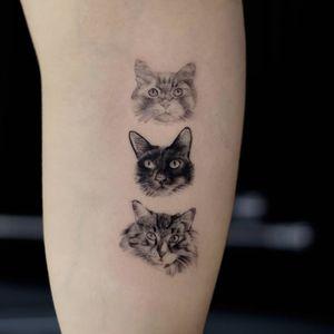 Cats #cat #cats #cattattoo #animalportrait #greywashtattoo