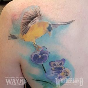 Got to do a bit more work on this goldfinch, looking great! #colortattoo #goldfinch #wonderlandkitchener @cantcontainthewayne www.wonderlandstudioskw.com