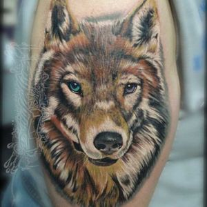 Wolf in color #tattoo #canidae #arm #wolf #head #wildlife #shoulder #carnivore #canis #wolfdog #redwolf #kunmingwolfdog #coyote #handtattoo #photooftheday #design #inked #instapic #tattoos #art #tattedup #instagood #tatted #sleevetattoo #tatts #inkedup #tattoist #instatattoo #coverup #ink #tattoo #arm #skin #pattern #designone #humanbody #font #back #flesh #drawing #art #photooftheday #tatted #instapic #instaart #tats #tattoos #tattedup #instatattoo #tattooed #floridatattooartist #deland #daytona #deltona #florida #volusiacountytattooartist #orlando #tattoosbydreadz #dannycollins